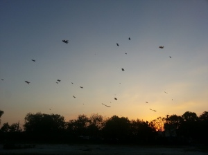 Silhouetted Kites