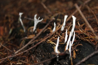 Spritely funghi #nofilter #noedit