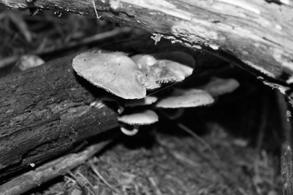 B&W Peaking shrooms #nofilter #noedit