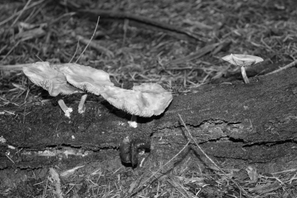 B&W Forest funghi #nofilter #noedit