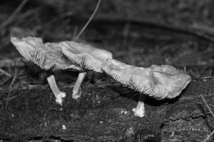 B&W Forest funghi 2 #nofilter #noedit