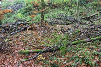 Fallen branches #nofilter #noedit
