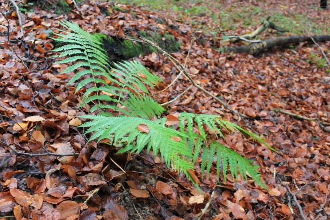 Stark green bracken #nofilter #noedit