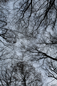 Staring up the sky while lying on the forest floor #nofilter #noedit