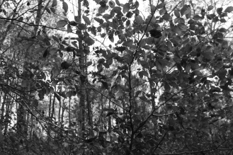 B&W Leaves #nofilter #noedit