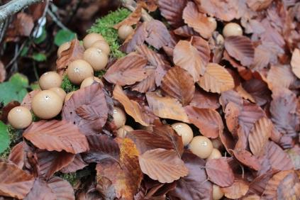 Peakaboo funghi balls #nofilter #noedit
