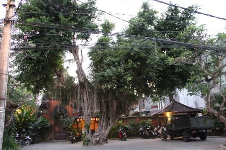Banyan Tree, Bali