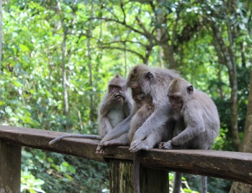 Came upon these little fellas while strolling through the monkey forest - warmed my soul!