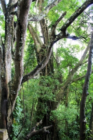 Monkey Forest Trees 1