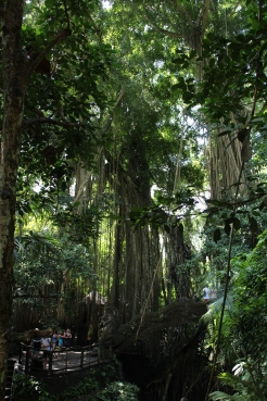 Monkey Forest Trees 12