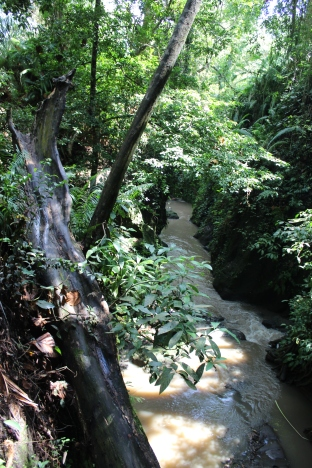 Monkey Forest Trees 15