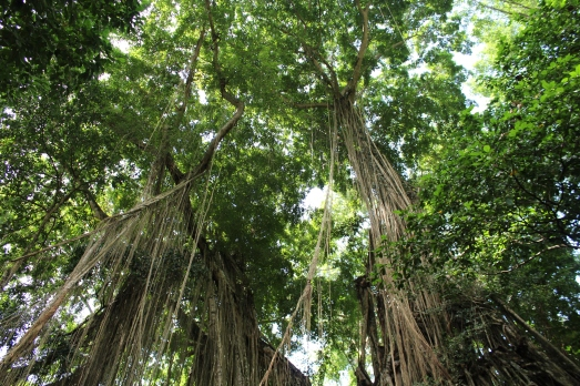 Monkey Forest Trees 16