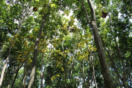 Monkey Forest Trees 2