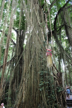 Monkey Forest Trees 20