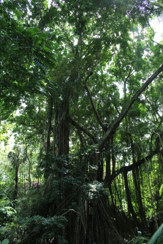 Monkey Forest Trees 23