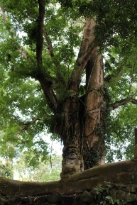 Monkey Forest Trees 9