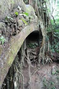 Monkey Forest Walkways 1