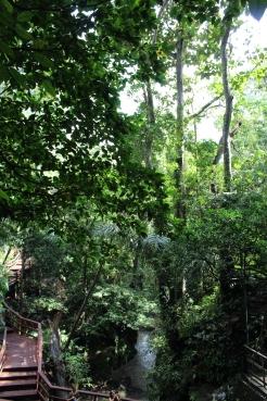 Monkey Forest Walkways 8