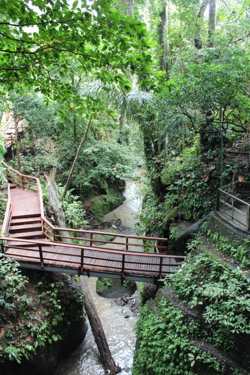 Monkey Forest Walkways 9