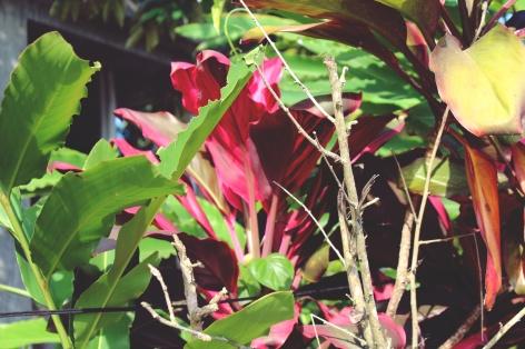 Tropical plants outside the villa, Ubud.