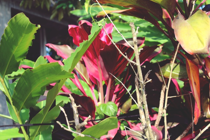 Tropical plants outside the villa, Ubud.