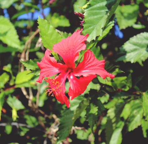 Tropical flowers outside the villa, Ubud.