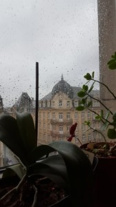 View from my window on this rainy grey day