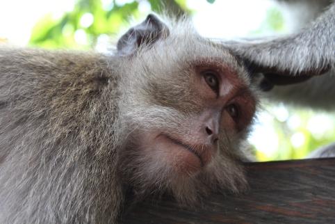 Monkey eyes