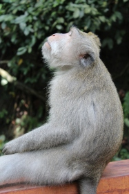 Monkey looking up