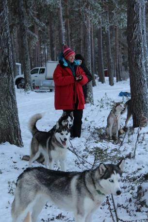 Husky sledding_3